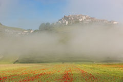 Castelluccio with poppy fields in morning Fog, Umbria, Italy Stock Photos