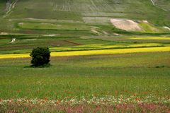 Castelluccio /spring fields. Spring landscape captured near Castelluccio di Norcia - Umbria - Italy Stock Images