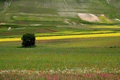 castelluccioen fields fjädern Arkivbilder