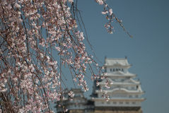 Castelo branco himeji japão do egret Foto de Stock