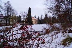 Castelo cor-de-rosa, lagoa e planta vermelha fotos de stock