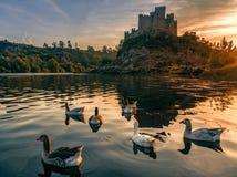 Castelo de Almourol no por do sol com gansos selvagens imagem de stock