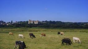 Castelo de Arundle na tarde imagem de stock royalty free