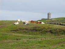 Castelo de Doonagore Imagem de Stock Royalty Free