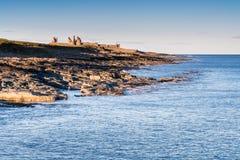 Castelo de Dunstanburgh do porto de Craster fotos de stock royalty free