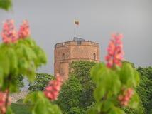 Castelo de Gediminas Imagens de Stock Royalty Free