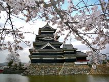 Castelo de Matsumoto com flores de cereja imagem de stock royalty free