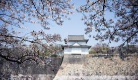 Castelo de Osaka com foco da flor de cerejeira na flor da cereja Fotos de Stock