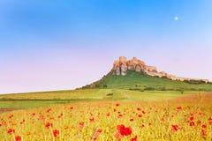 Castelo de Spis e campo da papoila imagens de stock royalty free