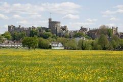 Castelo de Windsor e prado do botão de ouro Imagens de Stock Royalty Free