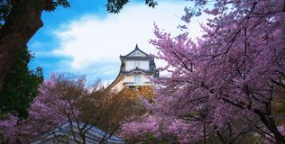 Castelo e flor de cerejeira brancos de Himeji imagens de stock royalty free