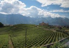 Castelo e vinhedos em Suíça Foto de Stock Royalty Free
