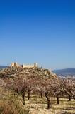 Castelo espanhol com florescência da árvore de amêndoas imagem de stock