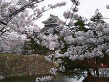 Castelo japonês durante a cereja fotografia de stock royalty free