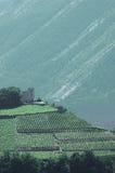 Castelo pequeno nas montanhas cercadas por vinhedos imagens de stock