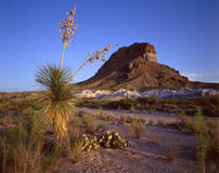 Castelon Peak & Soaptree Yucca. A soaptree yucca plant with Castelon Peak in the background located in Texas's Big Bend National Park Royalty Free Stock Photos