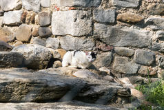 Castelseprio Lombardia, Italia, zona archeologica Fotografie Stock