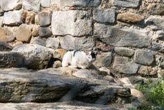 Castelseprio Lombardy, Italien, arkeologisk zon Arkivfoton