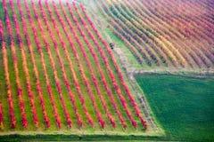 Castelvetro di Modena, vineyards in Autumn Royalty Free Stock Photography