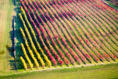 Castelvetro di Modena, vineyards in Autumn Stock Photography