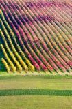 Castelvetro di Modena, vineyards in Autumn Royalty Free Stock Photo