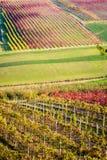 Castelvetro di Modena, vineyards in Autumn Stock Images