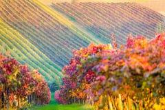 Castelvetro di Modena, vineyards in Autumn Royalty Free Stock Photos