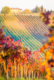 Castelvetro di Modena, vineyards in Autumn Royalty Free Stock Image