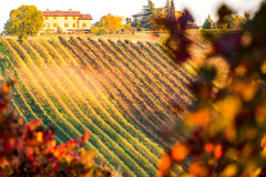 Castelvetro di Modena, vineyards in Autumn Stock Photos