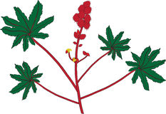 Caster oil plant (Ricinus communis) Royalty Free Stock Image