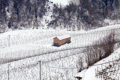 Castiglione Falletto Langhe, Włochy: zima śnieżni winnicy koloru córek wizerunku matka dwa Obrazy Royalty Free