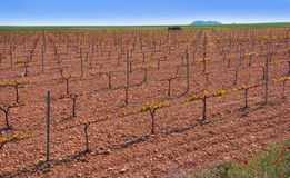 Castile La mancha vineyard in Spain. Castile La mancha vineyard on Saint James Way of Levante Spain royalty free stock photos