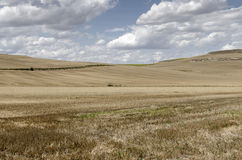 Castilla fields Royalty Free Stock Photo