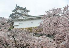 Castillo antiguo de Himeji con la flor de cerezo fotos de archivo