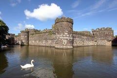 Castillo de Beaumaris con el cisne Foto de archivo libre de regalías