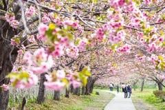 Castillo de Matsumae Foto de archivo libre de regalías