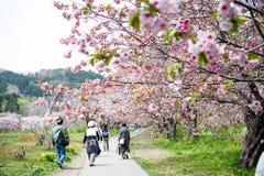 Castillo de Matsumae Fotografía de archivo libre de regalías
