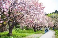 Castillo de Matsumae Imágenes de archivo libres de regalías