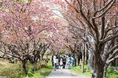 Castillo de Matsumae Fotos de archivo
