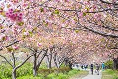 Castillo de Matsumae Fotos de archivo libres de regalías