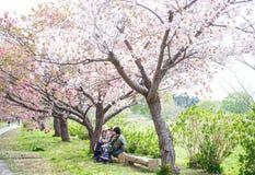 Castillo de Matsumae Fotografía de archivo