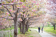 Castillo de Matsumae Foto de archivo