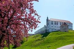 Castillo de Ptuj imagen de archivo