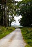 Castillo de Ross en el extremo de una trayectoria de la silvicultura de Killarney Fotos de archivo libres de regalías