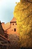 Castillo de Trakai y un abedul de oro Foto de archivo