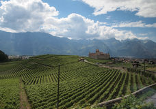 Castillo francés y viñedos en Suiza Foto de archivo libre de regalías