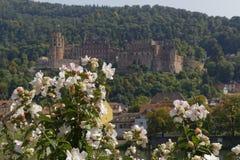Castillo romántico de Heidelberg fotos de archivo libres de regalías