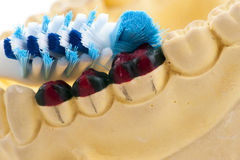 Casting of teeth model and toothbrush Stock Image