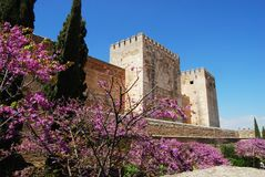Castle, Alhambra Palace. Cistern Court (Plaza de los Aljibes), East side of the castle with pink tree blossom in foreground and tourists enjoying the sights Stock Photo