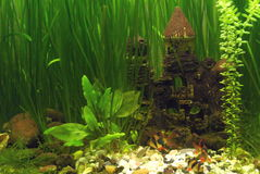 Castle in the aquarium Stock Image